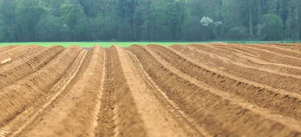Le champ de Jean-François avant la plantation