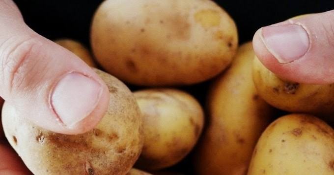 patates1-001
