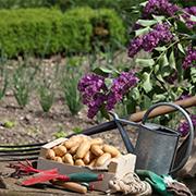 A la floraison du lilas...