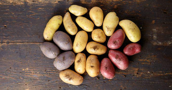 variétés de pommes de terre Touquet Savour